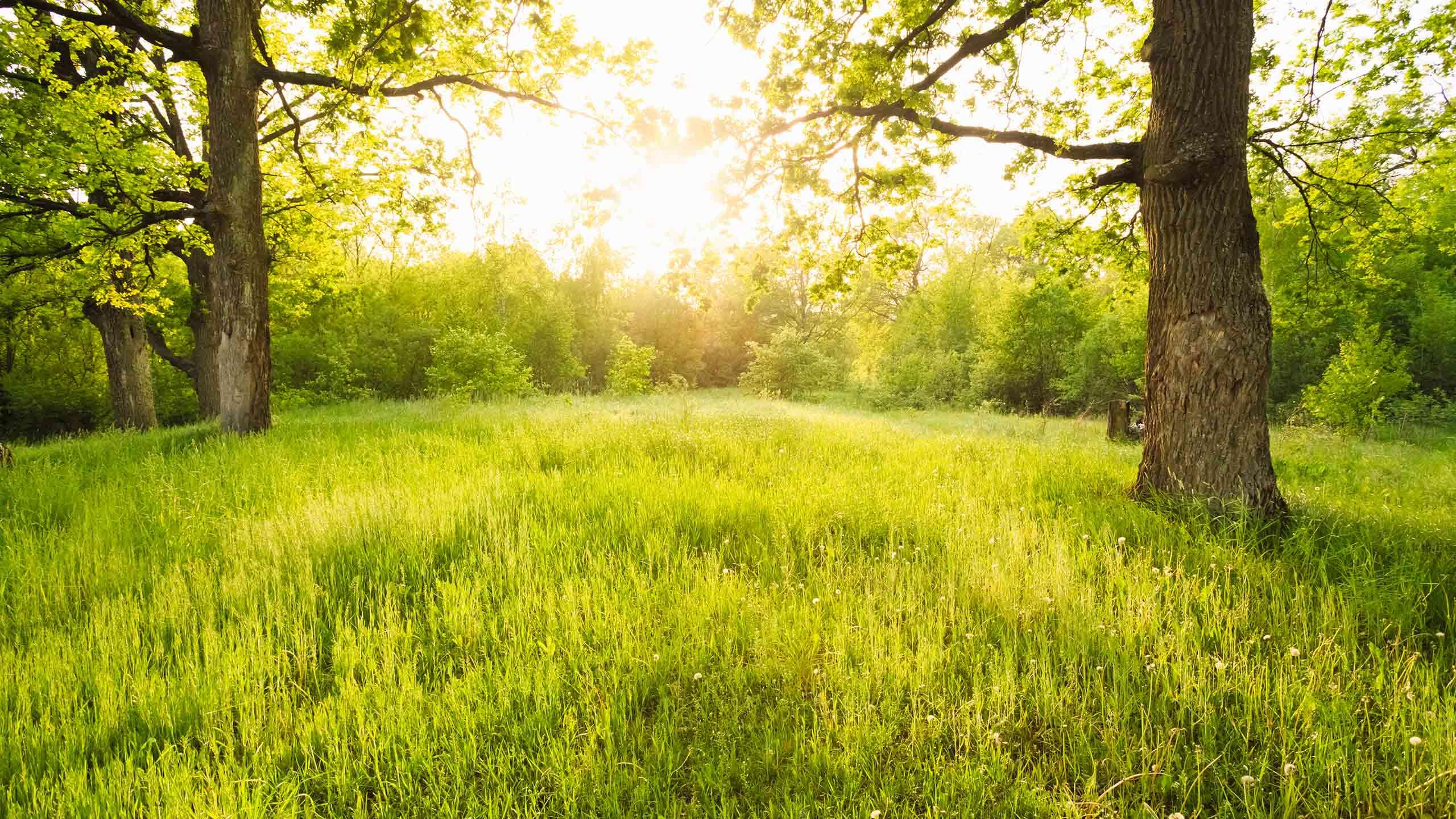 Grüne Waldlichtung